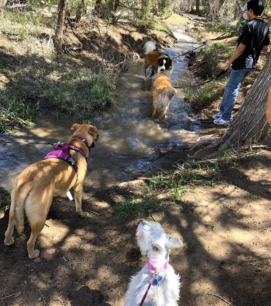 Dogs in and by a stream