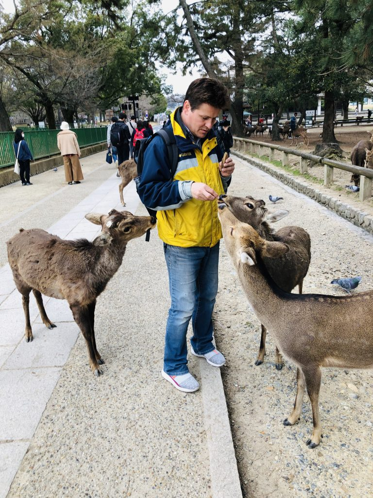 deer and people at nara deer park