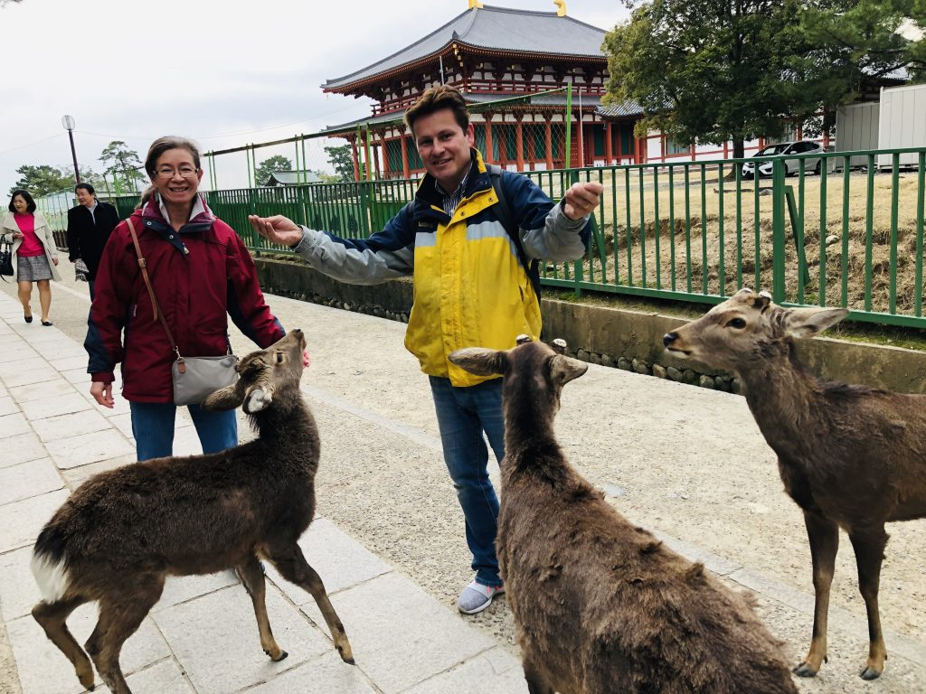 people and deer at nara deer park